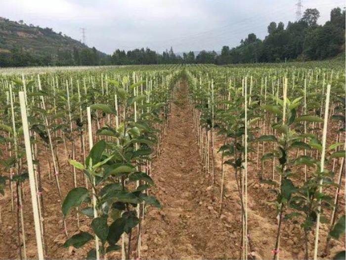 东莞凯达专注生产农业用玻纤杆 玻璃纤维树木支撑杆